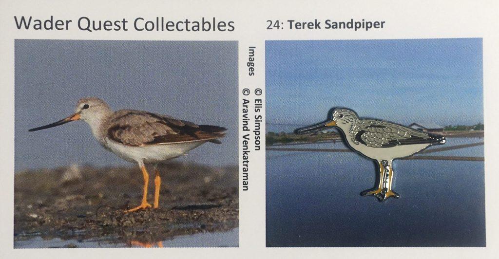 Nº24 Terek Sandpiper