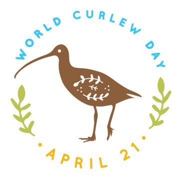 World Curlew Day – The trials and tribulations of being a Curlew