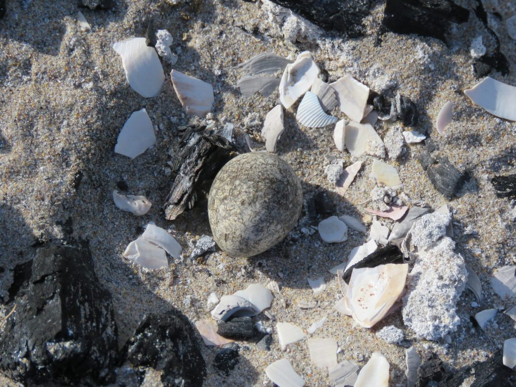 Three-banded Plover eggs © Brittany Arendse
