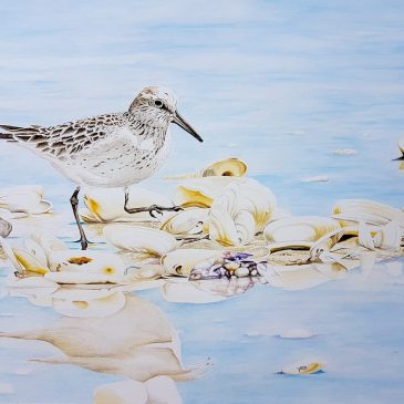 Lots nature; Art by Heidi Lots for sale through Wader Quest