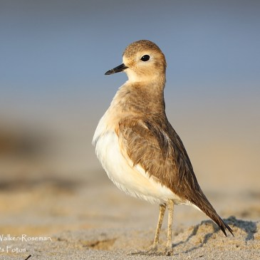 Wader Conservation World Watch results and newsletter out now!