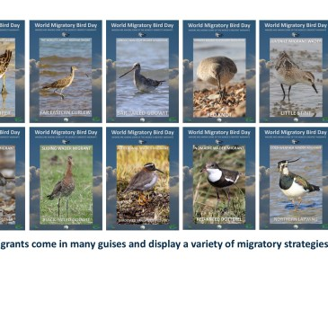 10 facts about Wader migration for World Migratory Bird Day