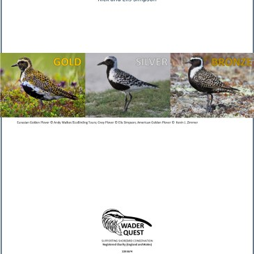 Wader Olympics for Plover Appreciation Day