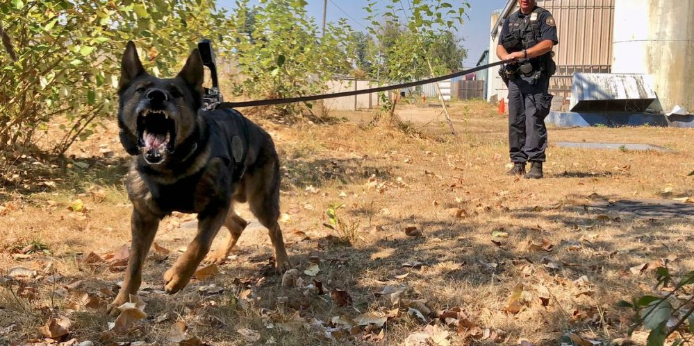 Some police dogs now have cameras, too