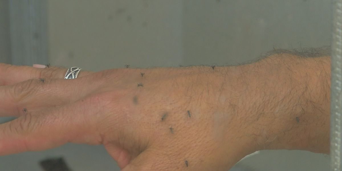 mosquito bites could lead