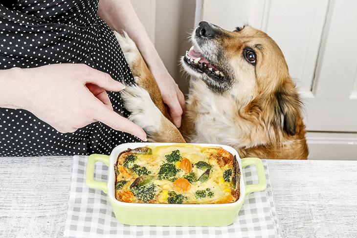 5 surprising health benefits of home cooked meals for your dog