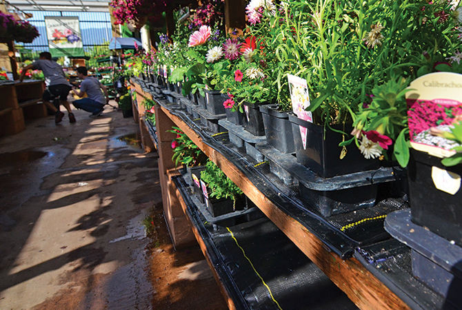 Irrigation Mats Significantly Reduce Water  Consumption in Garden Centers