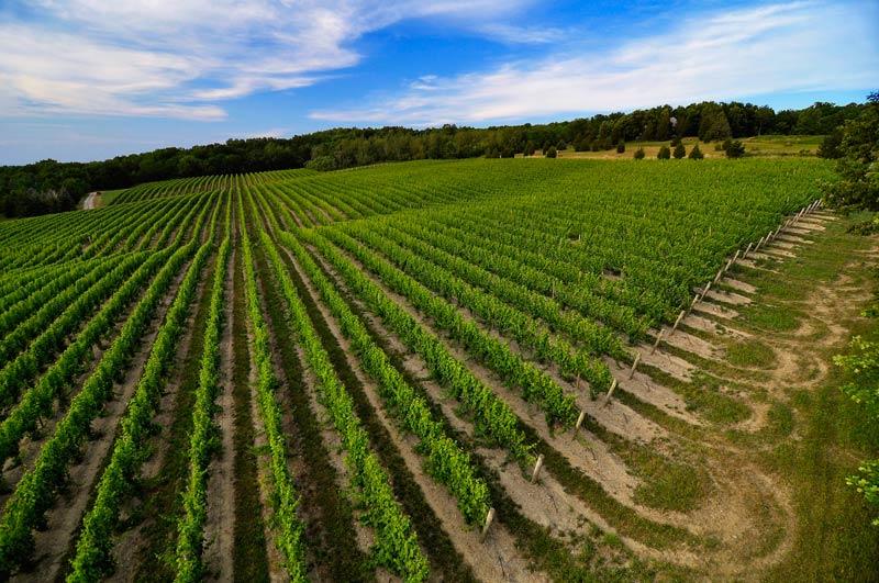 Aerial vineyard