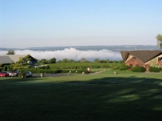Fog over the lake behind the vineyard