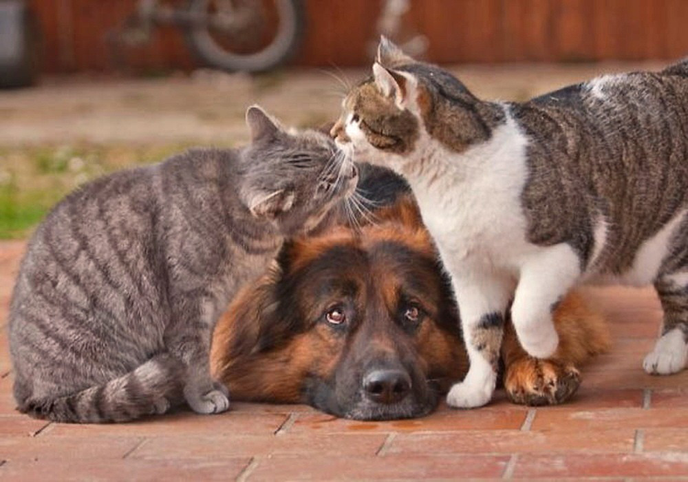 Multiple dogs and cats