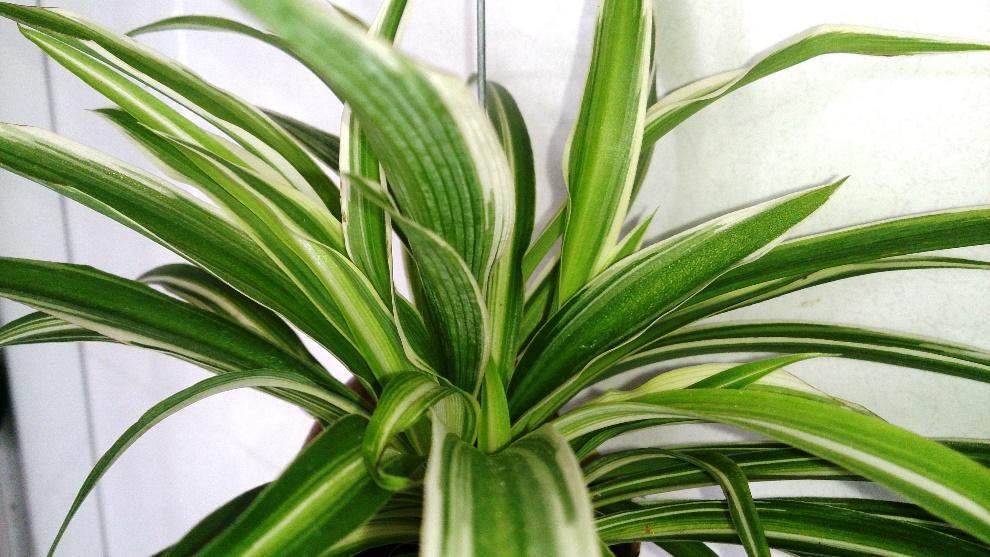 Non-Toxic Non-Flowering Houseplants