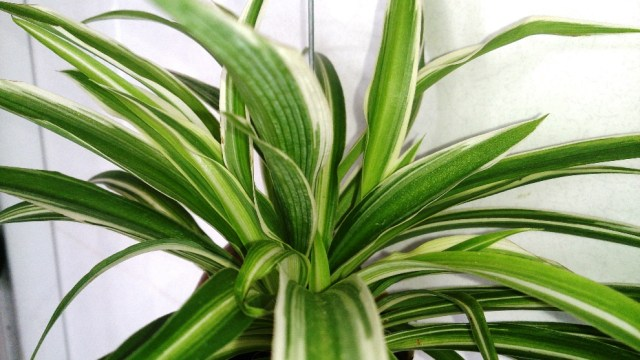 Non-Toxic Non-Flowering Houseplants