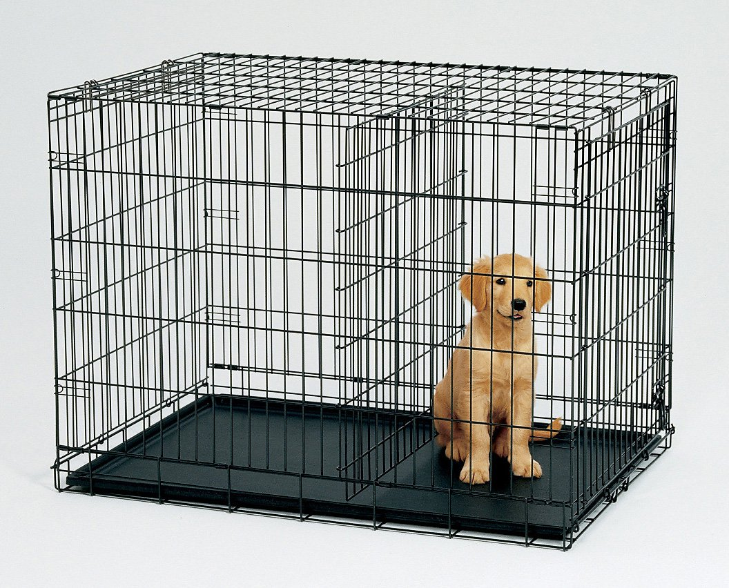 Puppy in a crate with divider