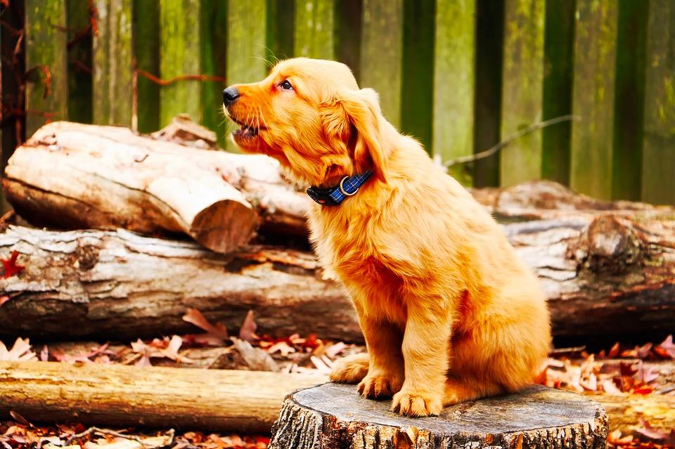 Barking dog on the log