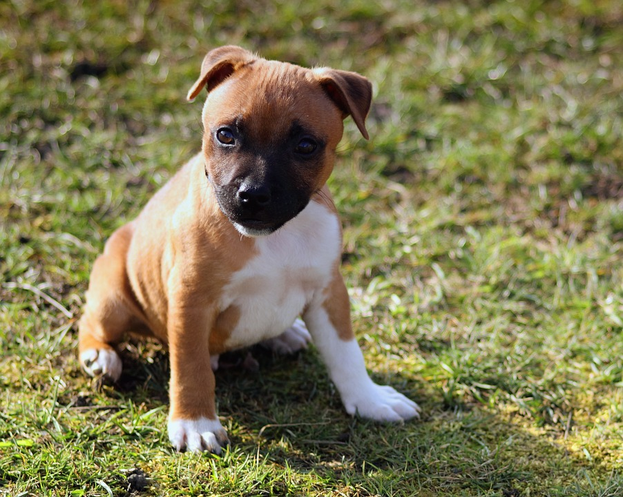 Dog Obedience Training with a Professional Puppy Class