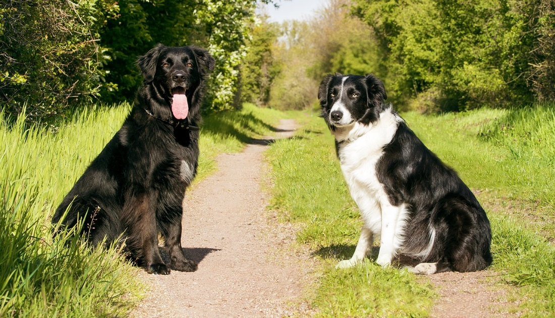 Teaching Your Dog Advanced Obedience Commands