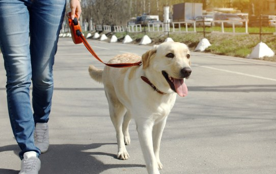 Taking Control: How to Train Your Puppy to Walk on a Leash