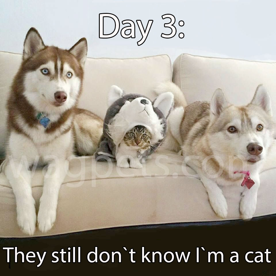 Day 3: they still don`t know I`m a cat