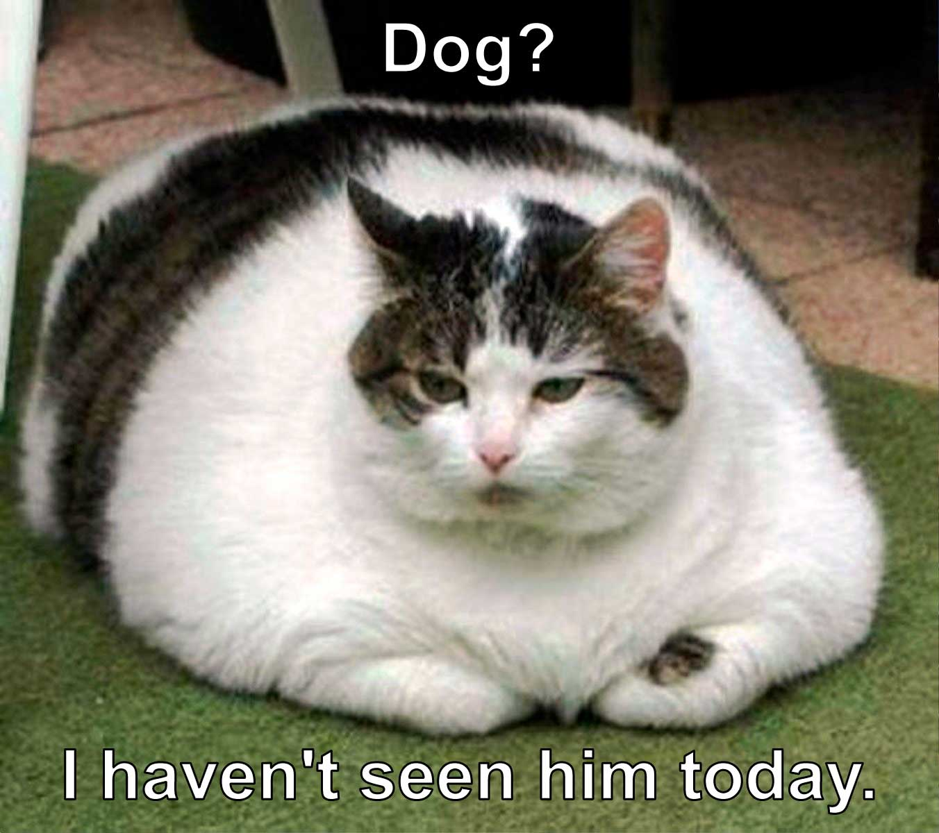 Dog? I haven't seen him today