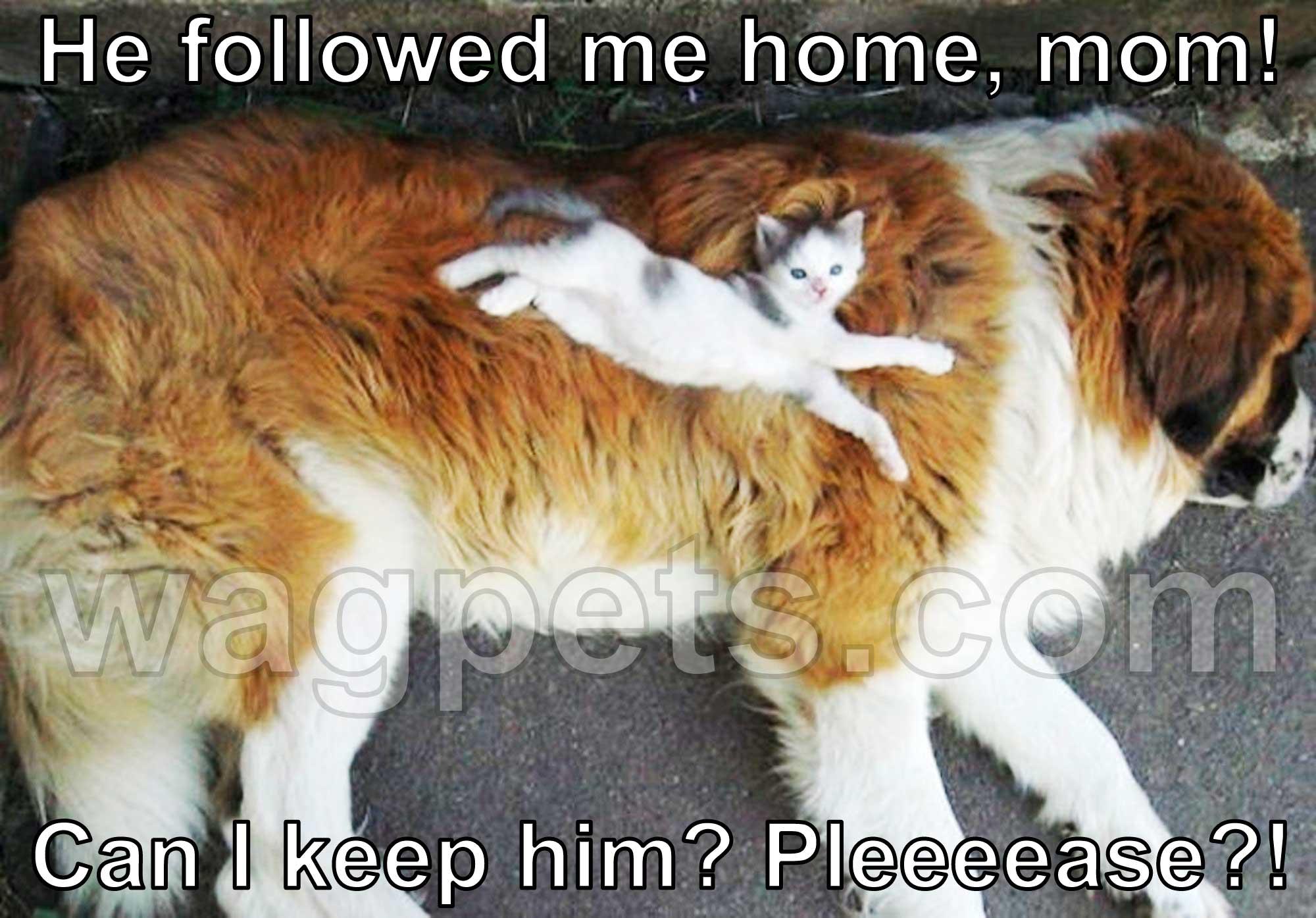 He followed me home, mom! Can I keep him? Pleeeease?!