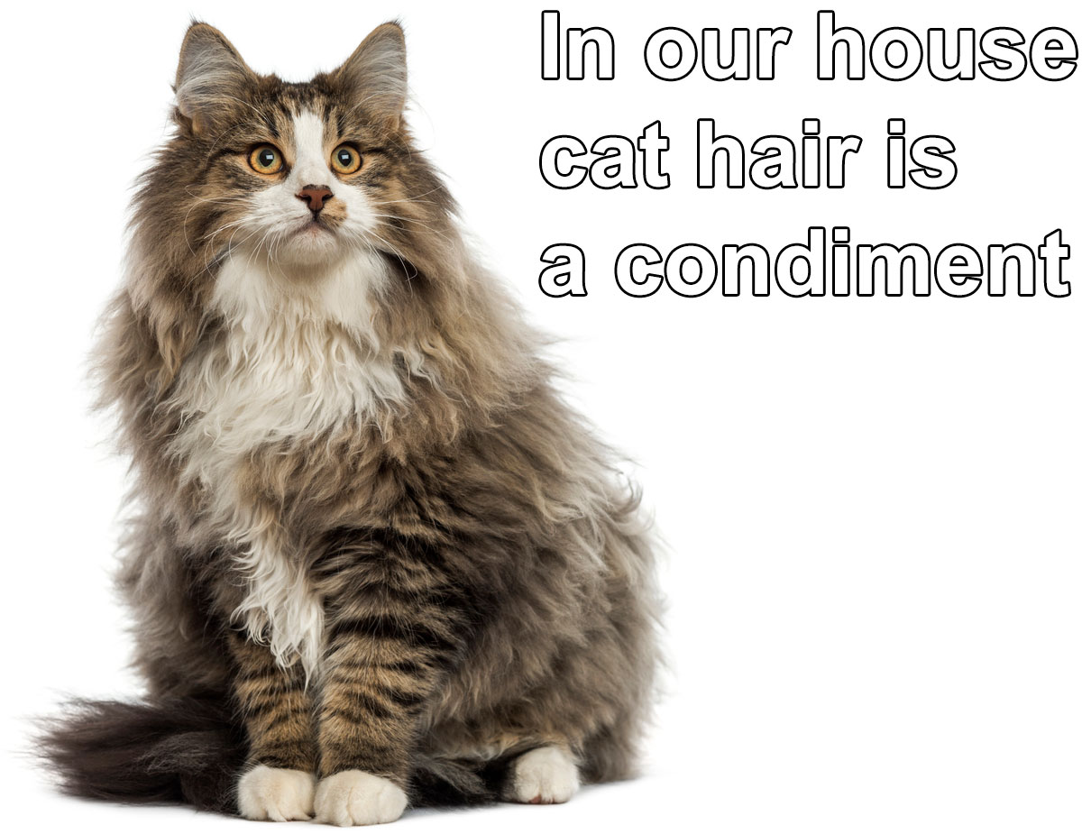 In our house pet hair is a condiment