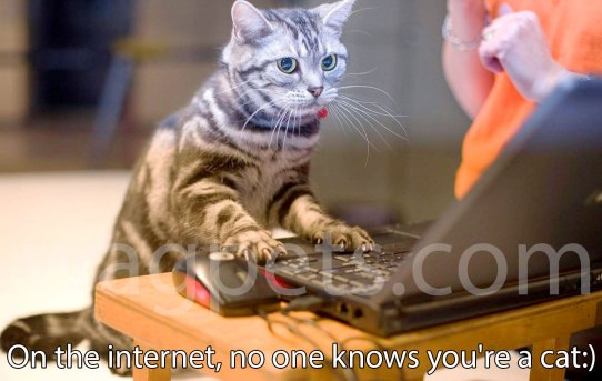 On the internet, no one knows you're a cat