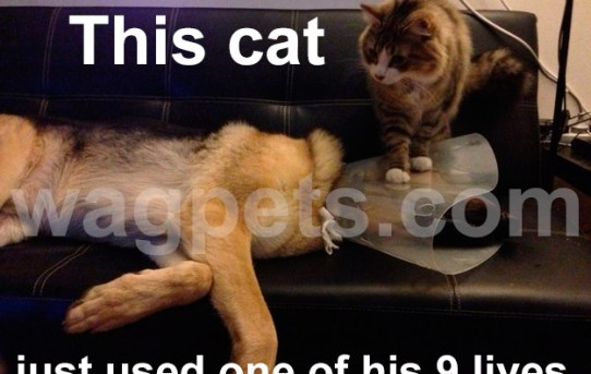 This cat just used one of his 9 lives.