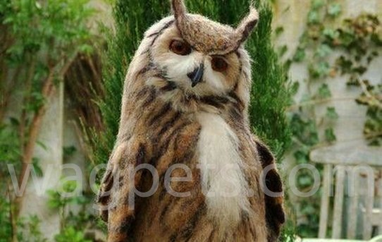 I google searched «dashing owl» and was not disappointed…
