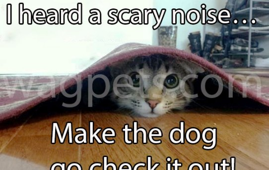 I heard a scary noise… Make the dog go check it out!