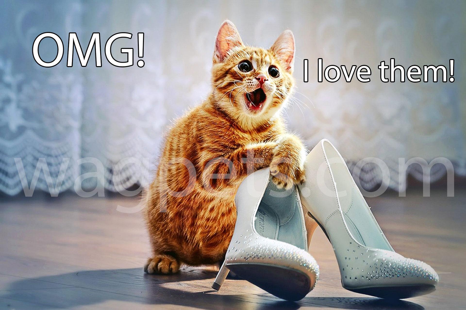 OMG! I love them!