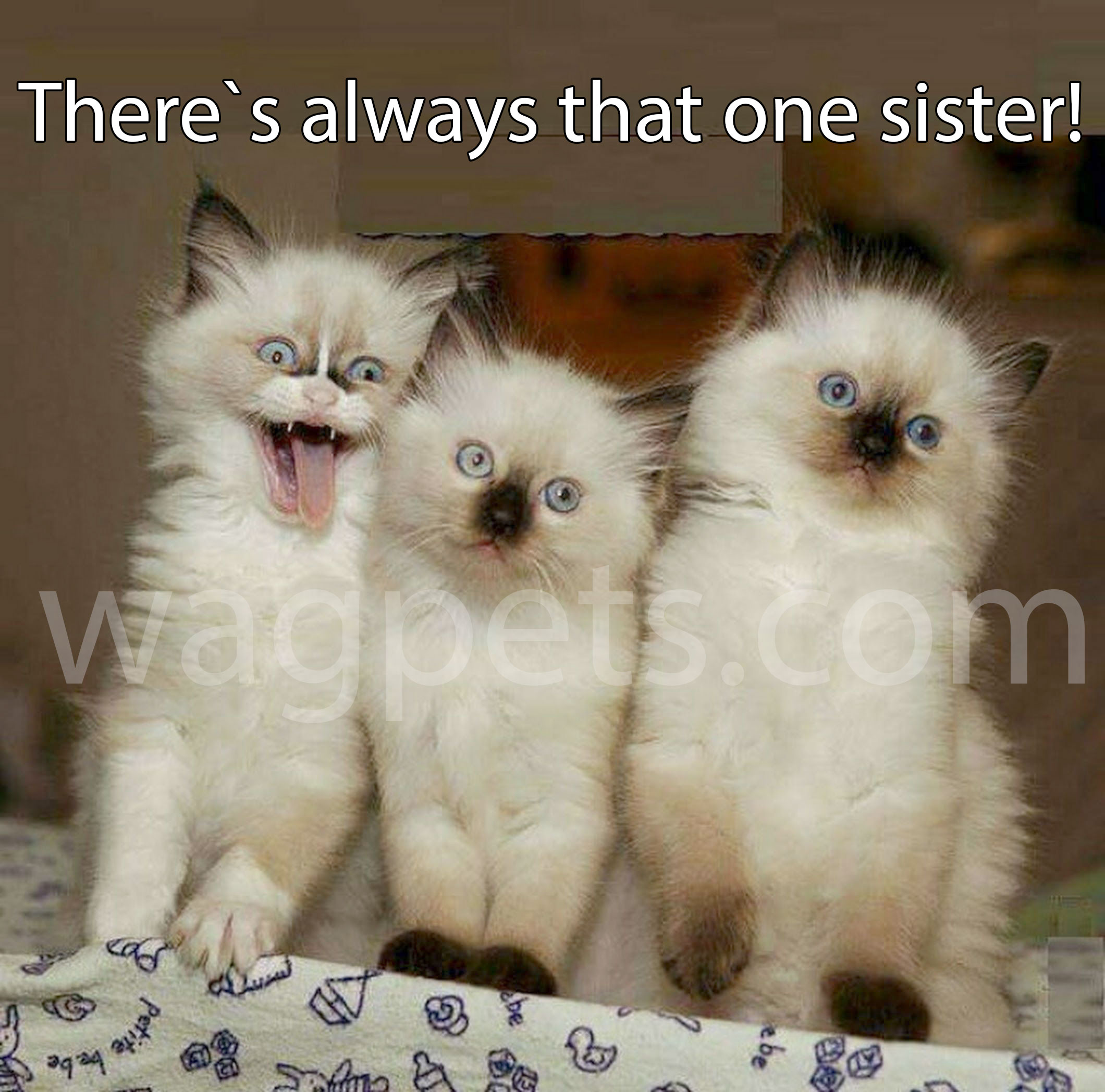 There`s always that one sister!