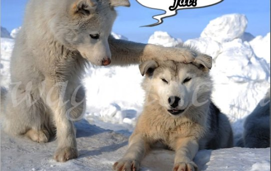 You`re not fat! You`re just a little husky!