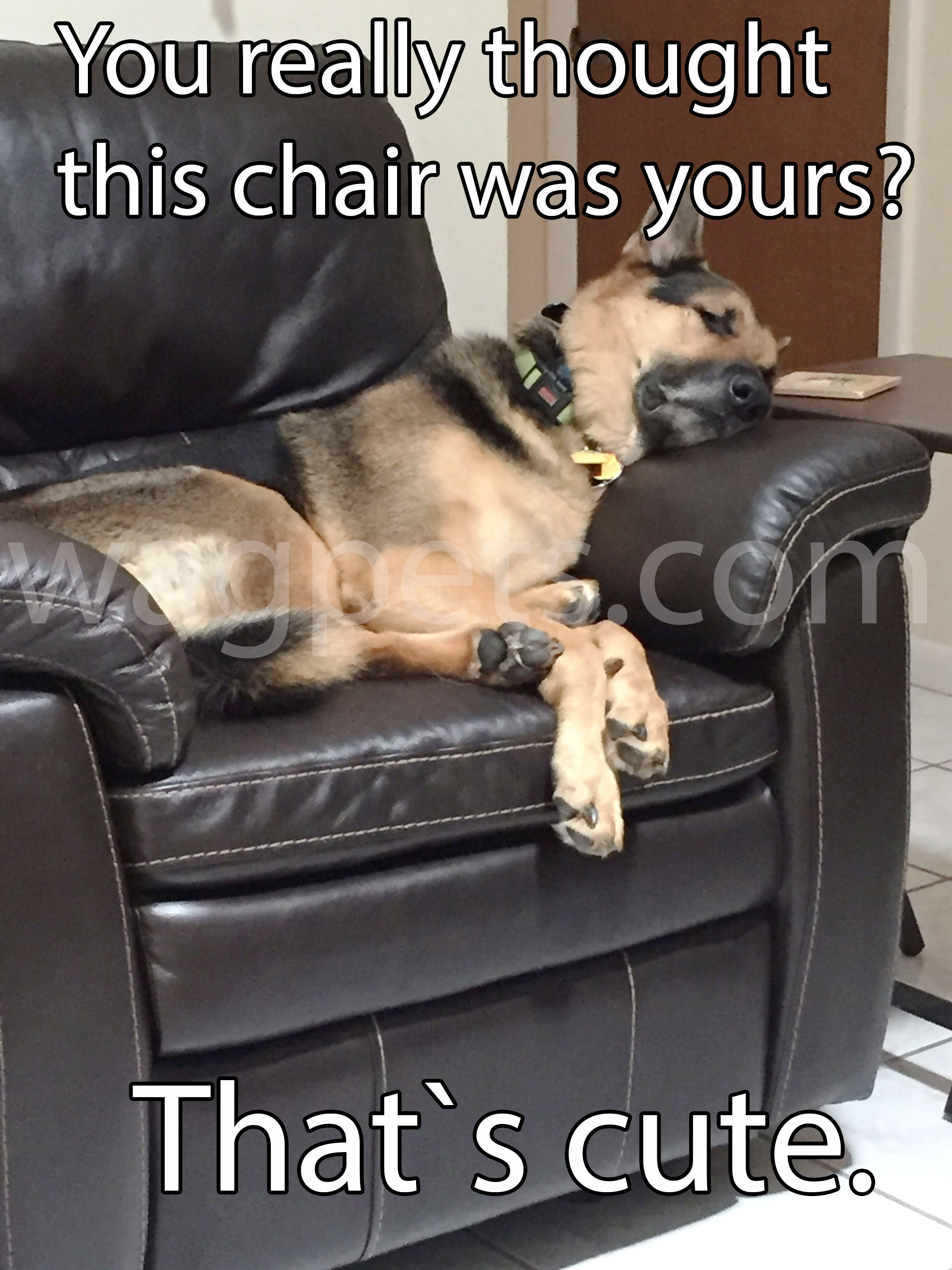 You really thought this chair was yours? That`s cute.