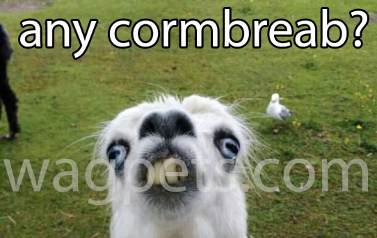 Hi! Y`all got any cormbreab?