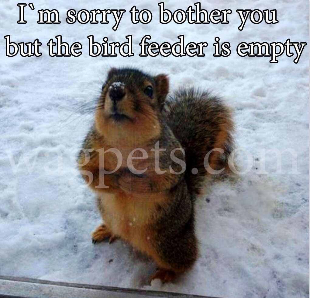 I`m sorry to bother you but the bird feeder is empty