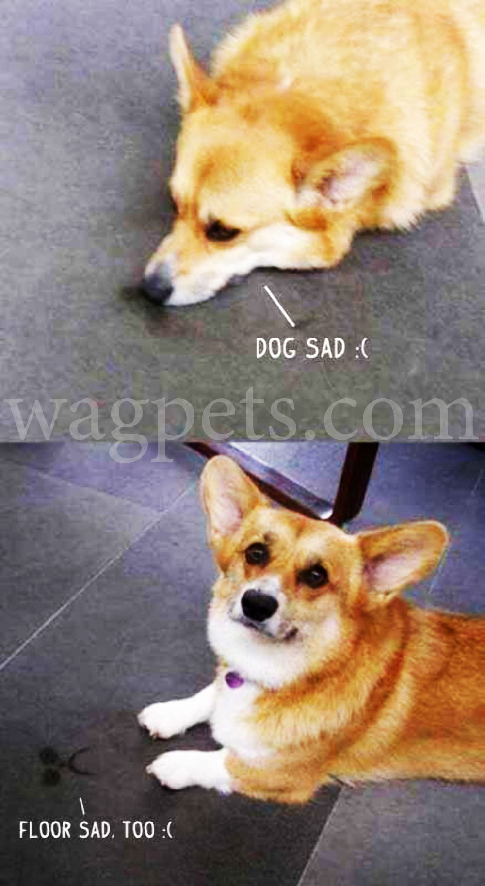 Dog sad:( Floor sad too:(