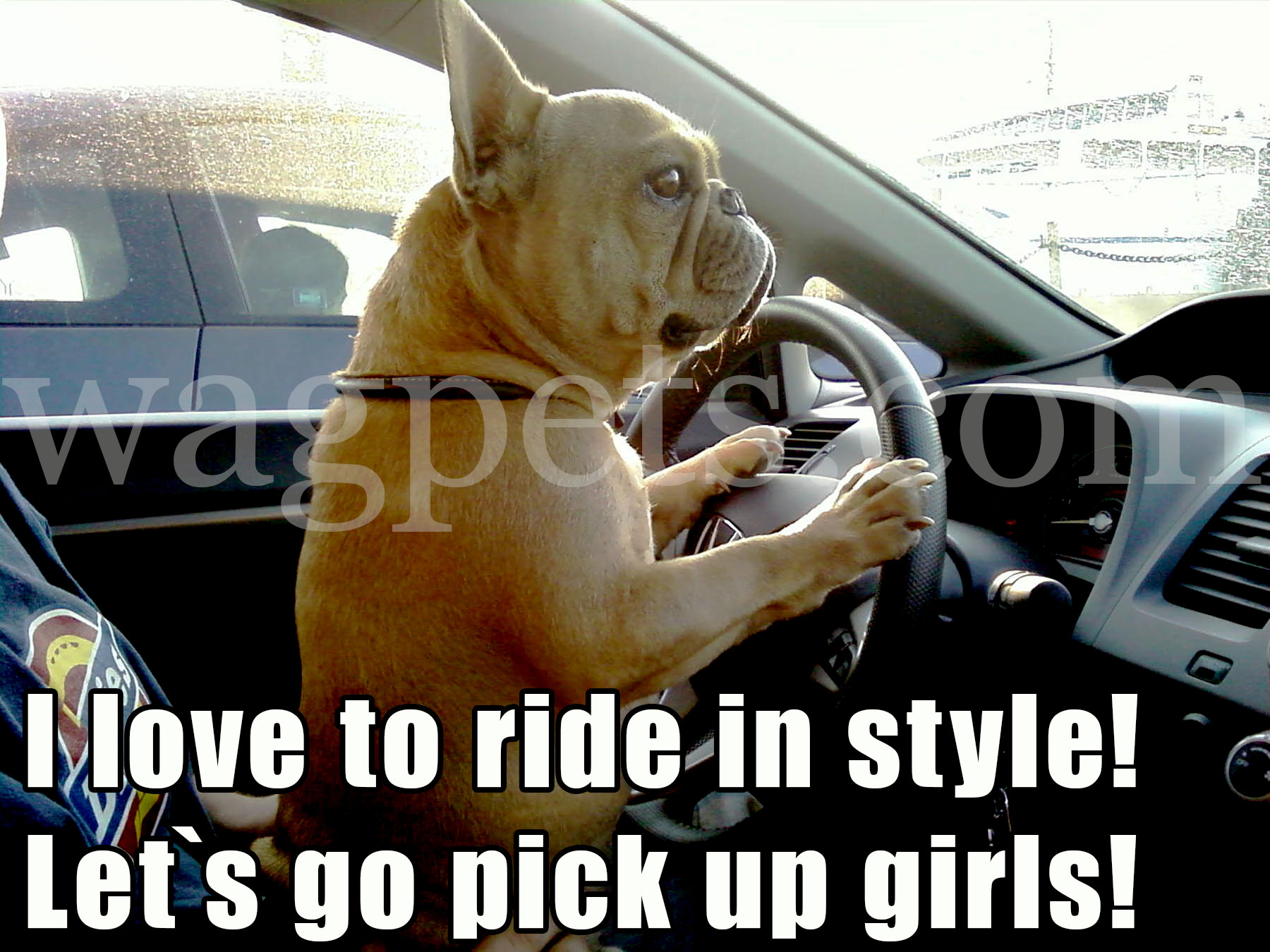 I love to ride in style! Let`s go pick up girls!