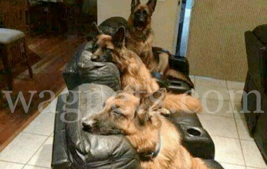 My dogs kept stealing my recliner… So, I bought them each one!