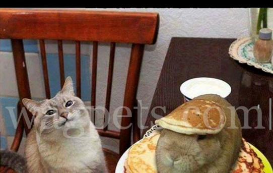 What is wrong with my pancakes, human?