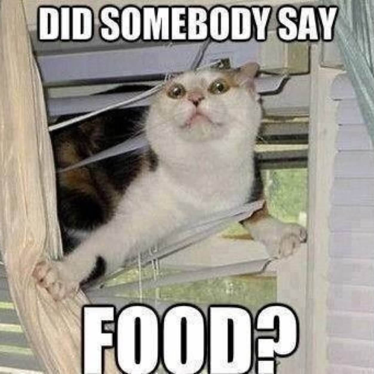 Did somebody say food?