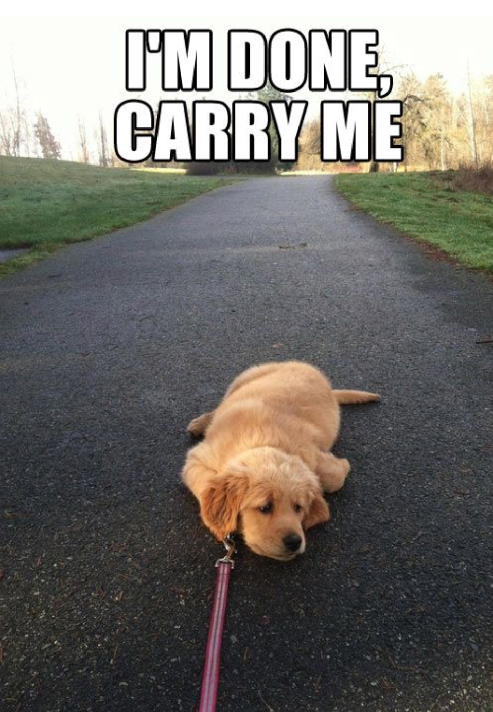 I'm done. Carry me.
