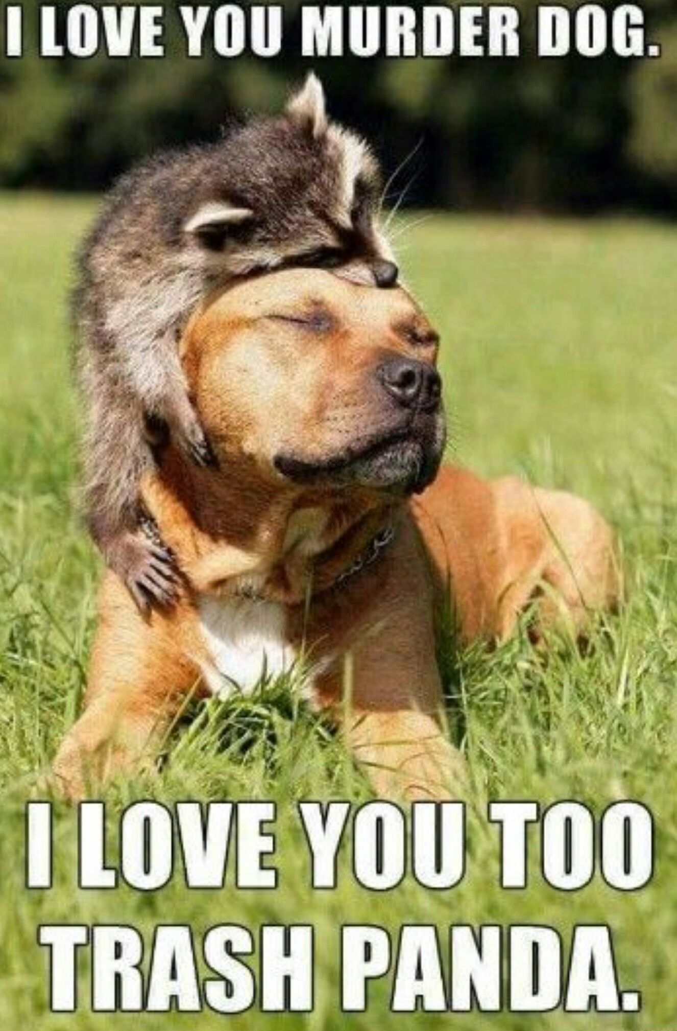 I love you murder dog. I love you too trash panda.