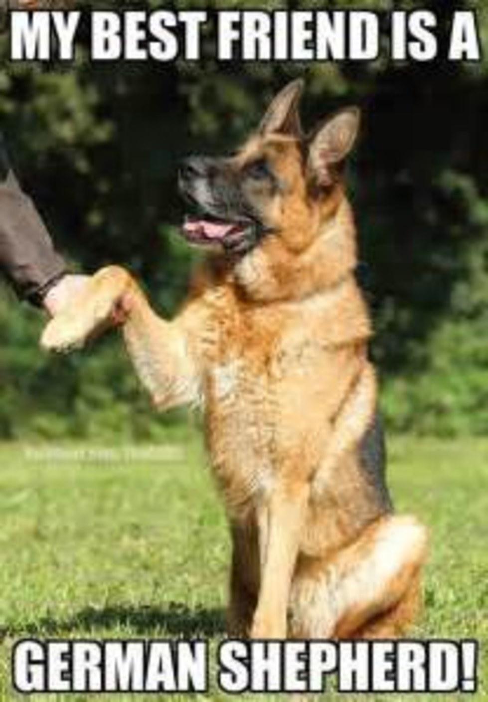 My best friend is a German Shepherd!