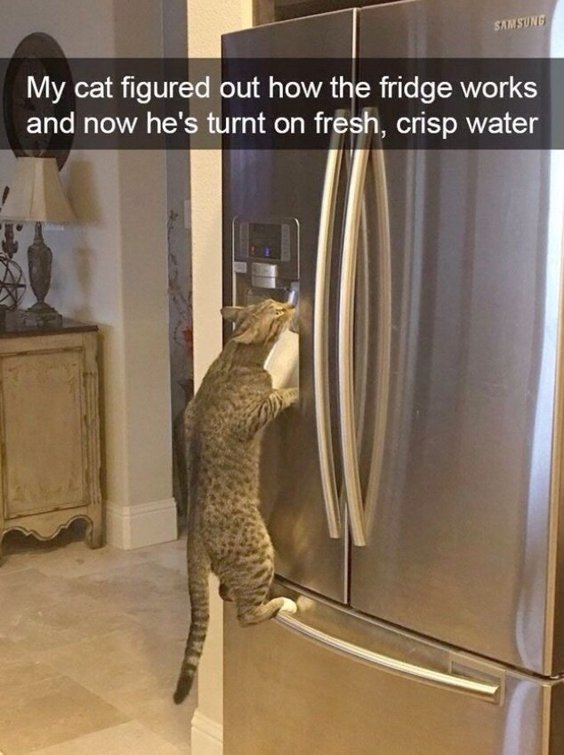 My cat figured out how the fridge works and now he's turnt on fresh, crisp water