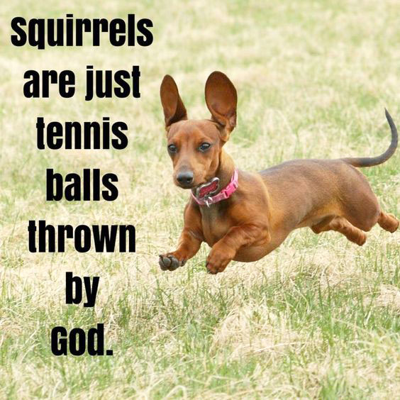 Squirrels are just tennis balls thrown by God.