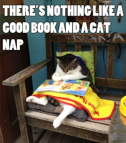There's nothing like a good book and a cat nap