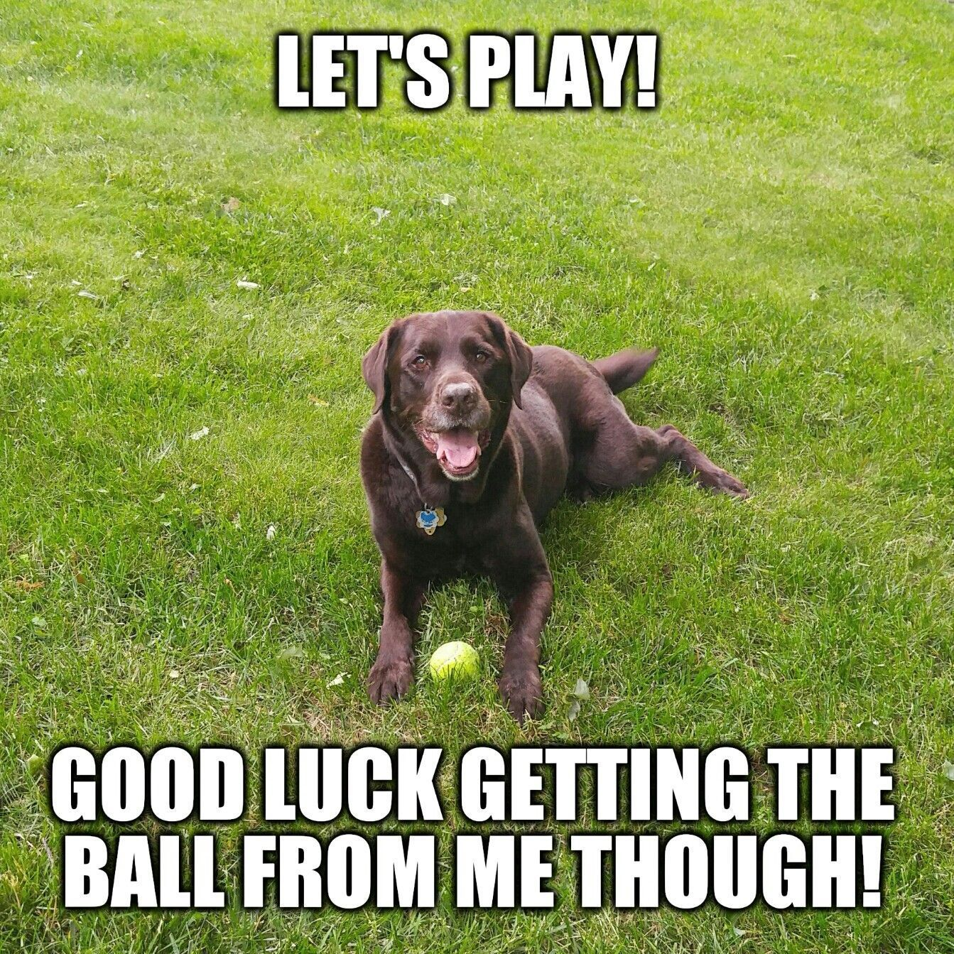 Let's play! Good luck getting the ball from me thought!