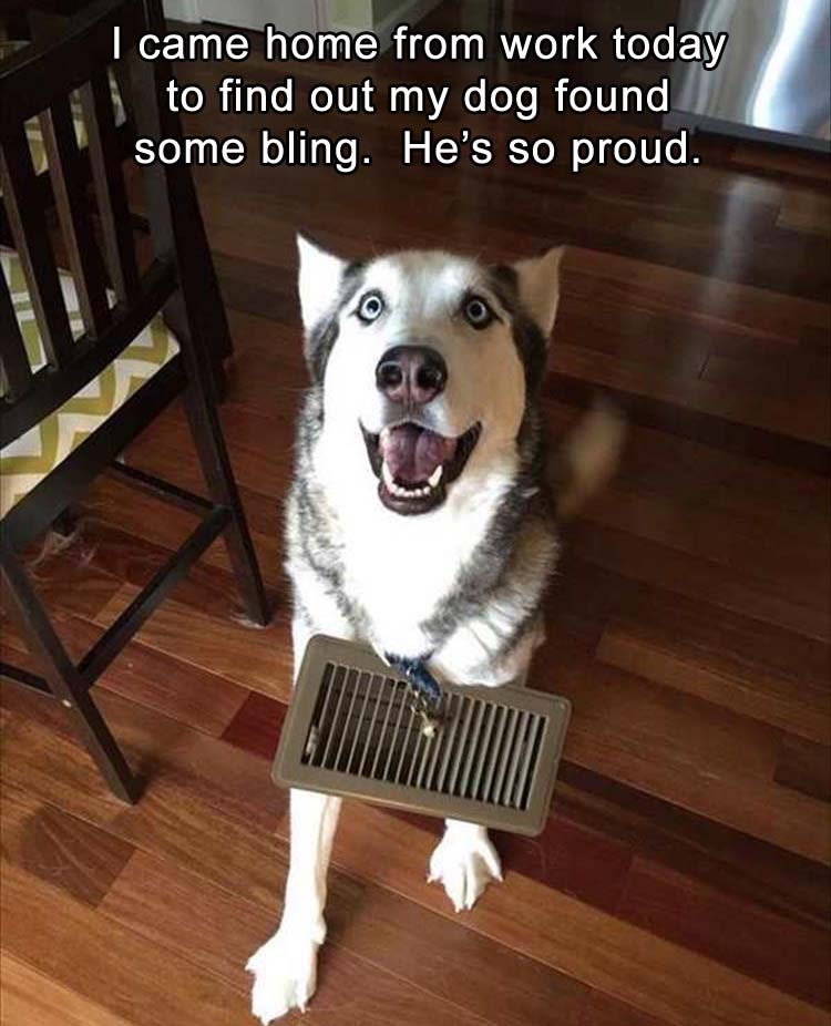 I came home from work today to find out my dog found some blind. He's so proud.