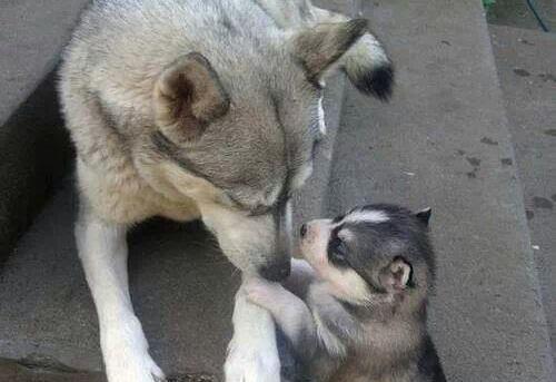 Mom! They called me husky
