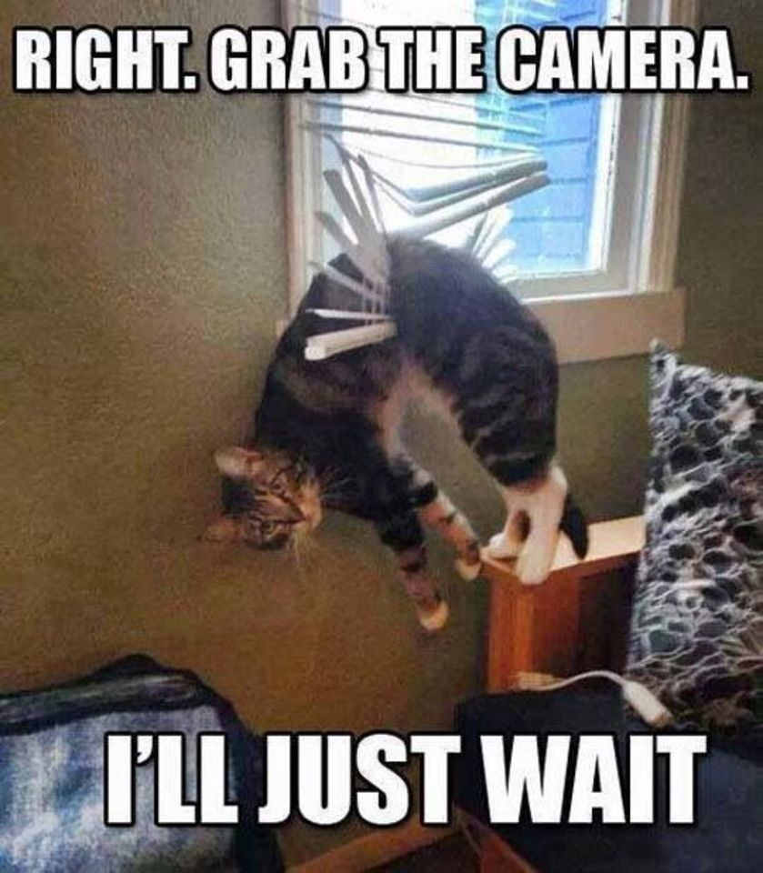 Right. Grab the camera. I'll just wait.